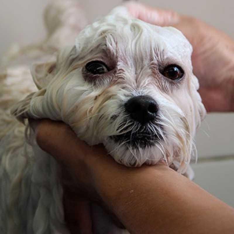 Cachorro Banho e Tosa Tamboré - Banho Tosa