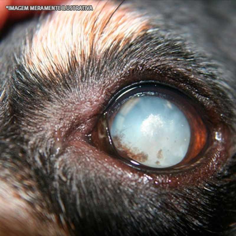 Cirurgia Catarata Veterinária Valor Alto de Pinheiros - Cirurgia Veterinária de Cães
