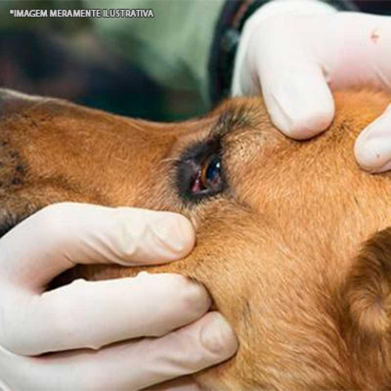 Cirurgia Oftalmológica Veterinária Tamboré - Cirurgia Veterinária de Cães