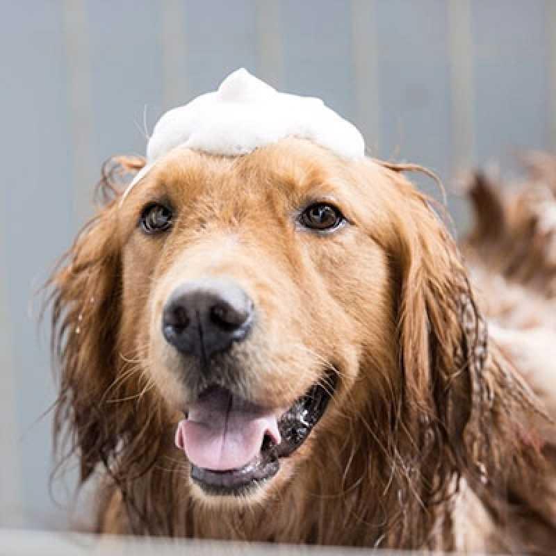 Clínica Banho e Tosa de Cachorro Alto de Pinheiros - Banho Tosa