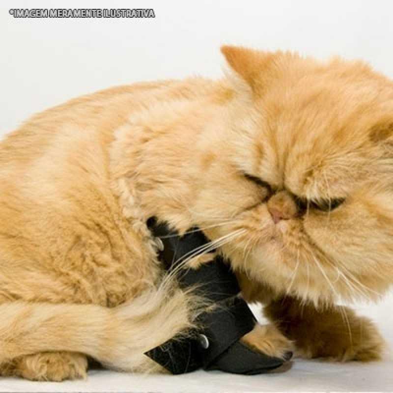 Clínica de Ortopedia para Gatos Bela Cintra - Ortopedista para Animal
