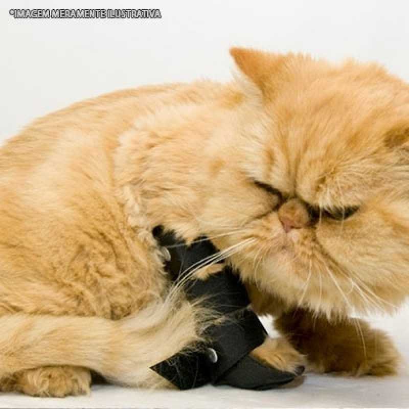 Clínica de Ortopedia para Gatos Pacaembu - Ortopedista para Gatos