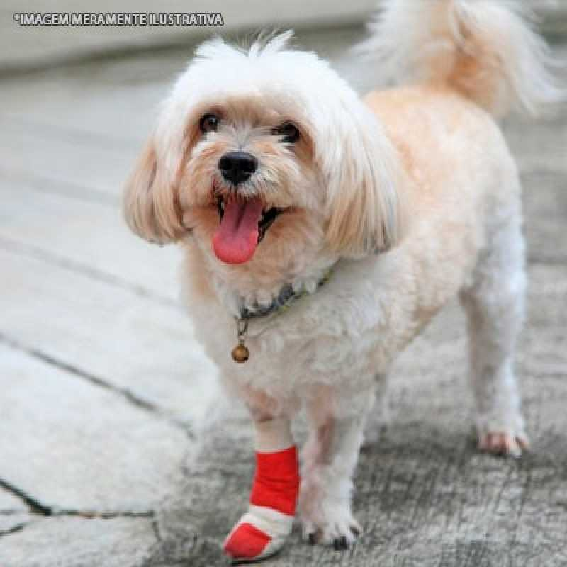 Clínica de Ortopedia Pequenos Animais Itaim Bibi - Ortopedista para Cachorro