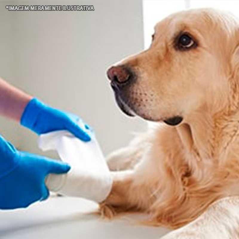 Clínica de Ortopedista de Cachorro Jardins - Ortopedista para Animal