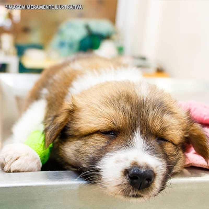 Clínica de Ortopedista para Cachorro Itaim Bibi - Ortopedia Animal Veterinário