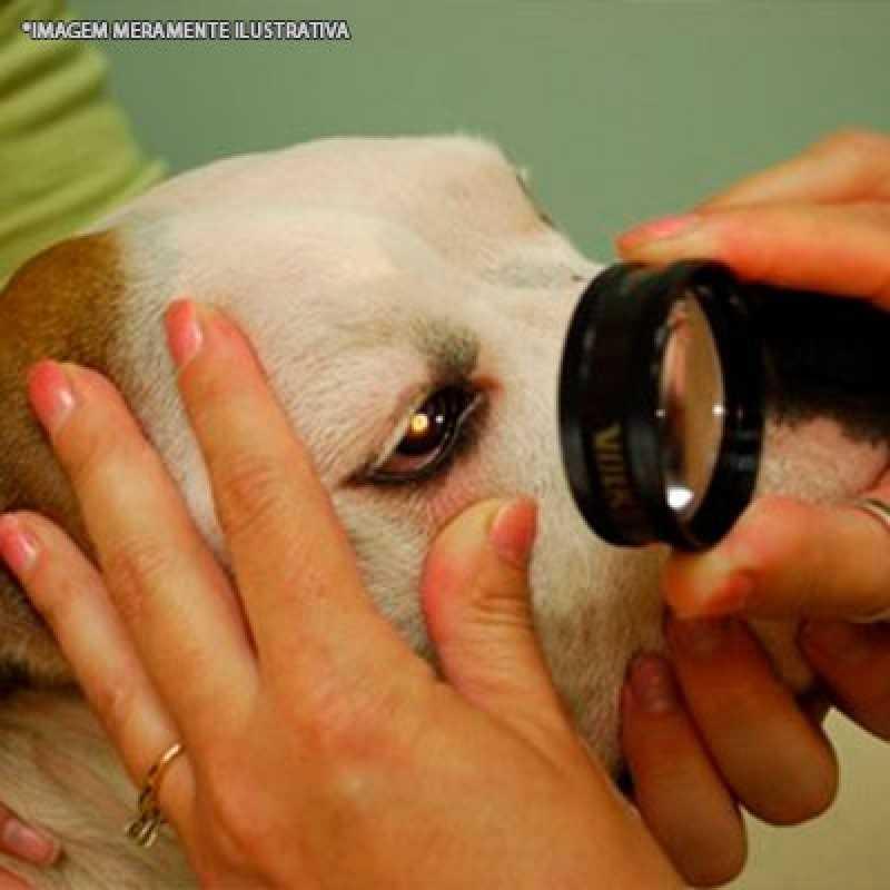 Clínica Que Faz Cirurgia Oftálmica Veterinária Pacaembu - Cirurgia Veterinária Cachorro