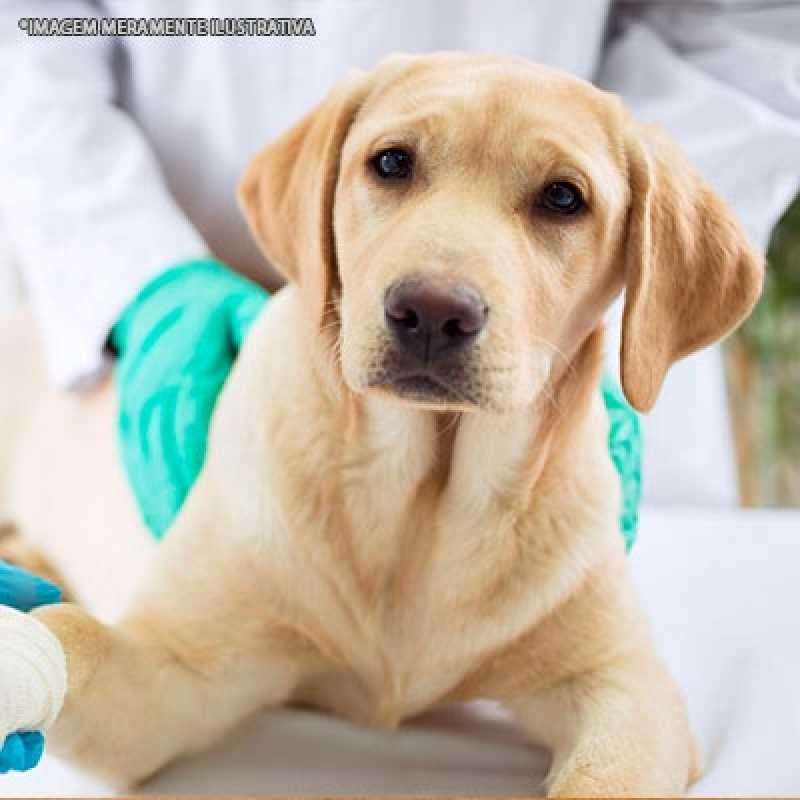 Clínica Que Faz Cirurgia Veterinária Ortopédica Morumbi - Cirurgia Veterinária de Cães