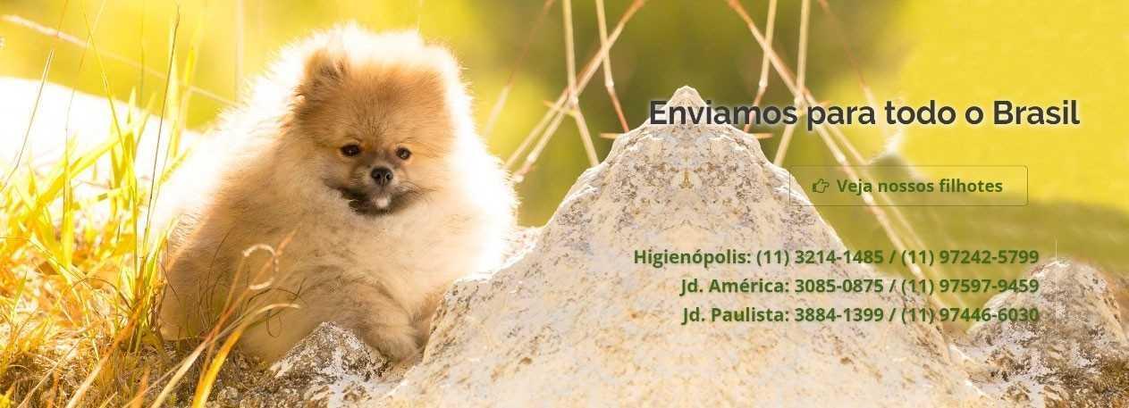 clinica-veterinaria-fisioterapia-encrenquinhas-banner2