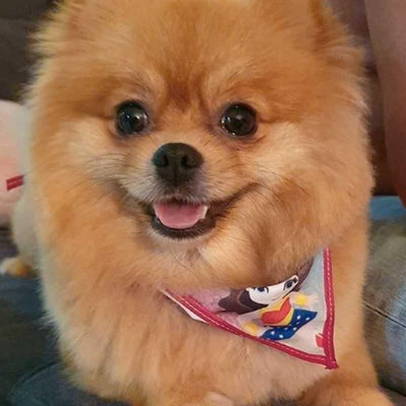 Empresa Que Faz Tosa em Pets Santana - Tosa Higiênica