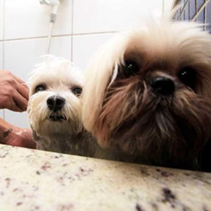 Empresa Que Faz Tosa para Cachorro Pacaembu - Tosa Cães
