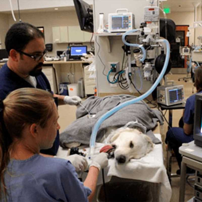 Endoscopia em Cachorro Tamboré - Endoscopia Digestiva em Cachorro