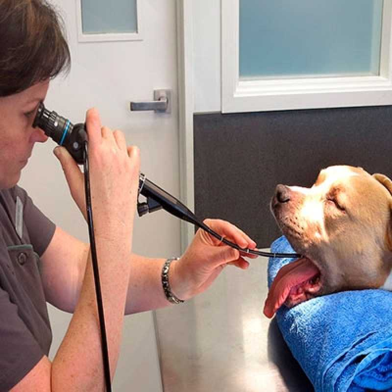 Endoscopia em Cão Agendar Santana - Endoscopia para Cachorro