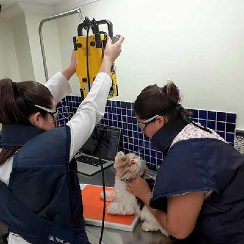Onde Encontro Clinica Veterinária Gatos Itaim Bibi - Clinica Veterinária Cachorros