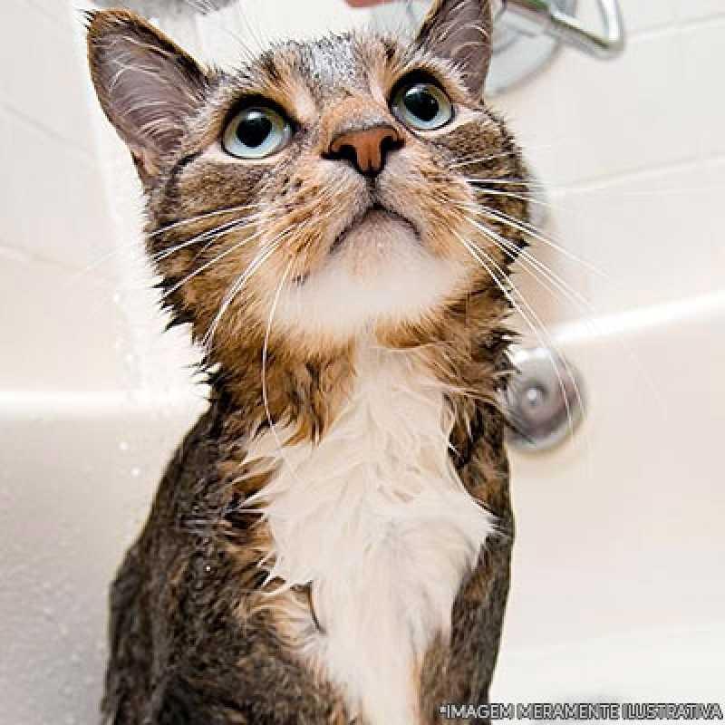 Onde Faz Banho e Tosa em Gatos Jardim América - Banho Tosa