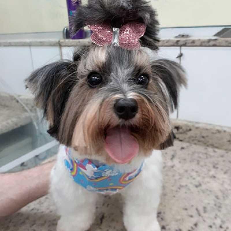 Onde Faz Banho e Tosa Pet Shop Berrini - Banho Tosa