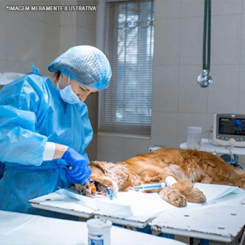 Onde Faz Cirurgia de Emergência Veterinária Tamboré - Cirurgia Catarata Veterinária