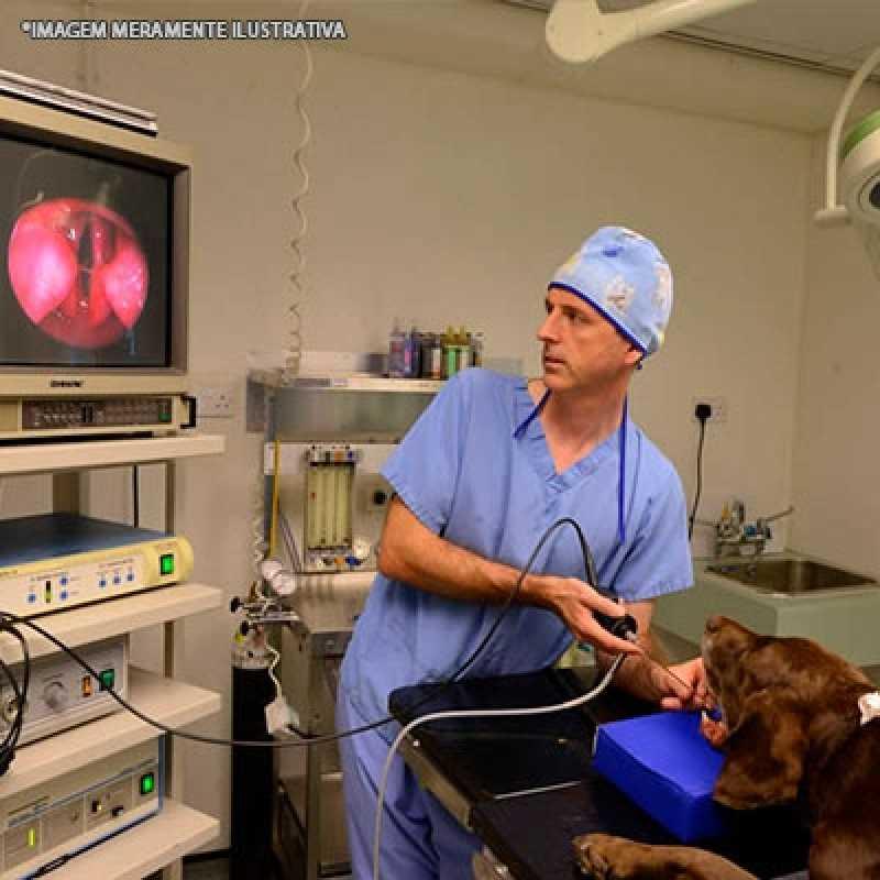 Orçamento de Endoscopia em Cães Itaim Bibi - Endoscopia em Cão