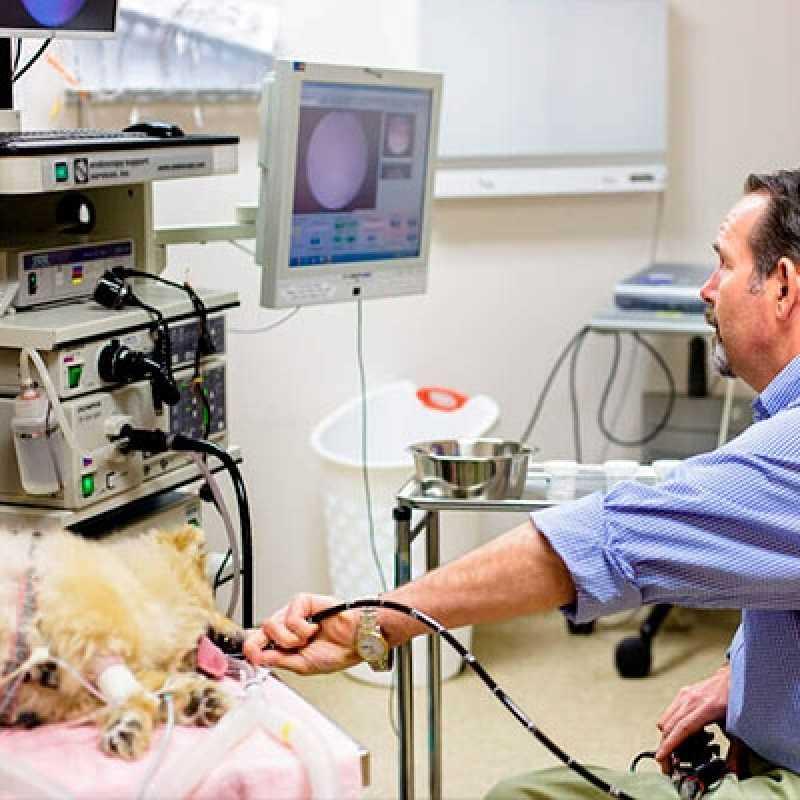 Orçamento de Endoscopia em Cão Jardim Europa - Endoscopia Digestiva em Cachorro