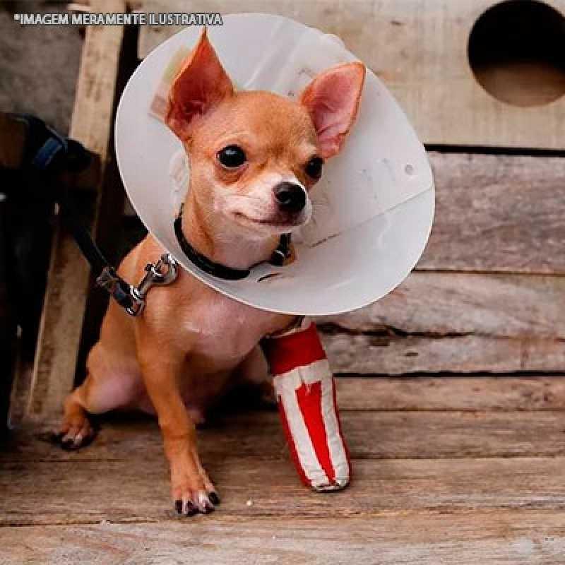 Ortopedia Pequenos Animais Agendamento Pompéia - Ortopedia Veterinária