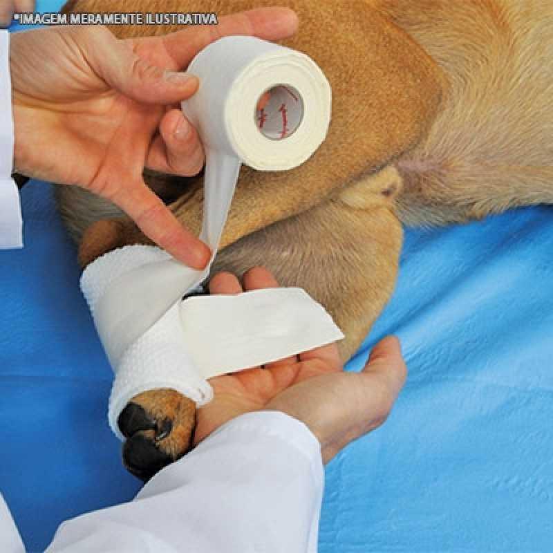 Ortopedia Veterinária Valor Perdizes - Ortopedia Pequenos Animais