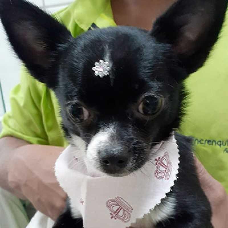 Pet Tosa Jardim Paulista - Tosa para Cachorro