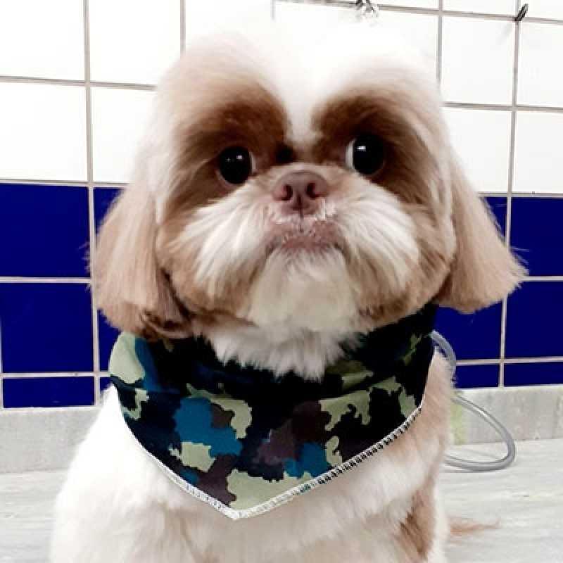 Serviço de Tosa Canina Jardim Europa - Pet Tosa