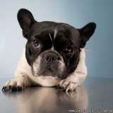 acupuntura em cachorro com labirintite agendar Higienópolis