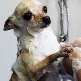 banho e tosa de cachorro