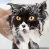 banho e tosa gato orçar Santana