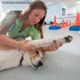 busco por fisioterapia veterinária cães e gatos Jardim América