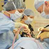 cirurgia de coluna veterinária Berrini