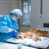 cirurgia veterinária cachorro valor Faria Lima