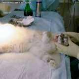 cirurgia veterinária castração