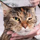 clínica banho e tosa gato Santana