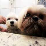 clínica cachorro banho e tosa Pacaembu