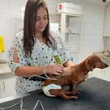 clinica de fisioterapia veterinária Faria Lima