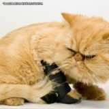 clínica de ortopedia para gatos Santana