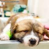 clínica de ortopedista para cachorro Jardins