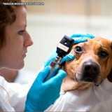 clínica para exame oftalmológico veterinário Pompéia