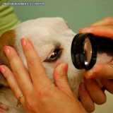 clínica que faz cirurgia oftálmica veterinária Bela Cintra