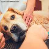 clínica que faz cirurgia veterinária de cães Alphaville