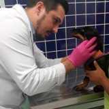 clinica veterinária cachorros contato Consolação