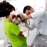 clinica veterinária cachorros Santana