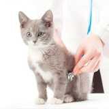 clinica veterinária de cães e gatos contato Bela Cintra