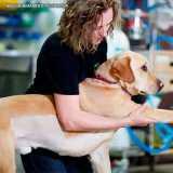 clinica veterinária fisioterapia valores Berrini