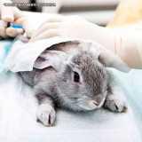 clinica veterinária para coelhos Jardins