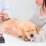 clinica veterinária para exames Higienópolis