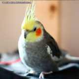 clinica veterinária para pássaros contato Bela Cintra