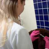 clinica veterinária de cães e gatos