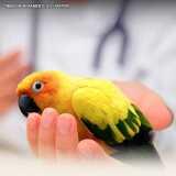 clinica veterinária para animais silvestres